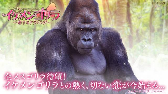 全メスゴリラに向けた新作恋愛ゲーム 『イケメンゴリラ 恋するドラミング』発表&事前登録開始!