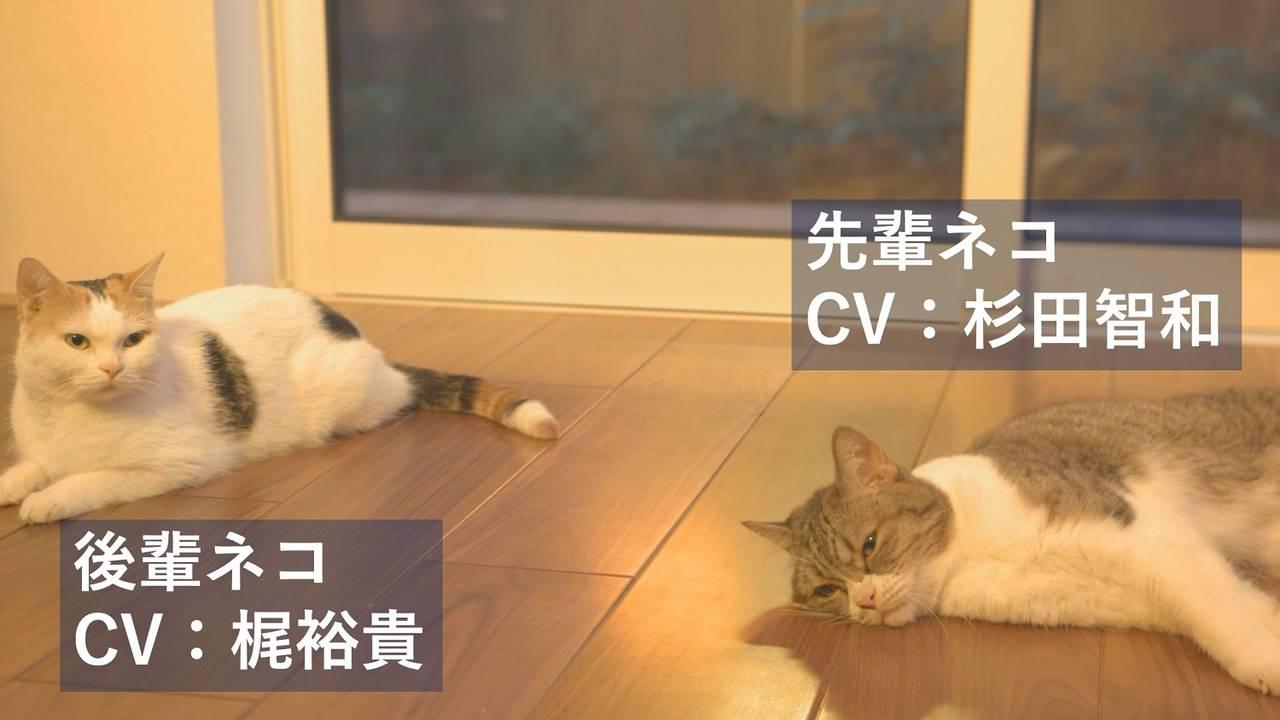 杉田智和&梶裕貴が「猫」にアテレコ!? 先輩猫&後輩猫の「アテネコ」動画公開中♪