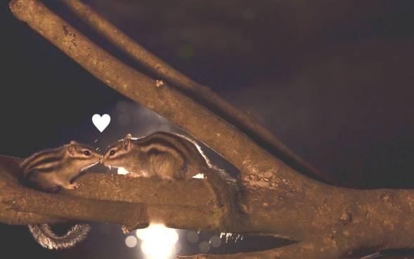 恋するリス君の団地散歩♪冬のキャナルタウンウェスト篇