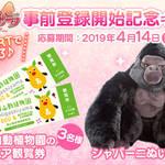 『イケメンゴリラ 恋するドラミング』3
