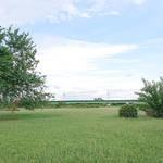 凪のお暇 聖地巡礼 ロケ地 多摩川緑地野球場 画像