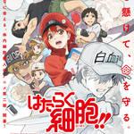 TVアニメ『はたらく細胞!!』第2弾PV公開7