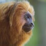 下野紘がナレーションを担当! 『南米の奇妙な動物大集合!』