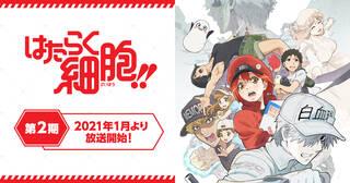 またみんなに会える。体内細胞擬人化アニメ第二期、開幕!TVアニメ「はたらく細胞!!」2021年1月放送開始!!